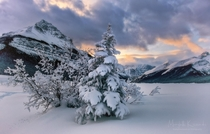 Canadian Winter Dreams - Icefields Parkway -