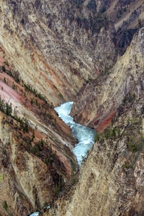 Canyon in Yellowstone National Park  x