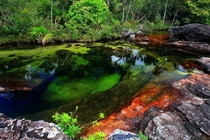 Cao Cristales Colombia - The river is commonly called The River of Five Colors The Liquid Rainbow or even  The Most Beautiful River in the World due to its striking colors like yellow green blue black and red All credit goes to Filiberto Pinzn El Tiempo