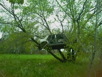 Car abandoned in a tree in Detroit Mi