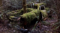 Car being reclaimed by the forest British Columbia