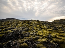 Carpets of moss in Grindavk Iceland