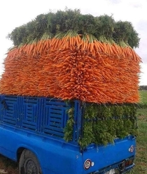 Carrot delivery