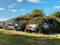 Cars getting reclaimed by nature in Cambridgeshire UK