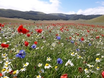 Castelluccio Di Norcia Umbria Italy Every July this high mountain plateau explodes into colour Taken at am