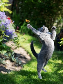 Cat Reaching For Butterfly
