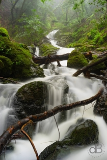 Cataract Falls on a misty day The forest and waterfalls never seem to end Marin County California