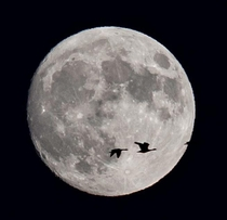 Caught a couple Canada Geese crossing the moon while I was out shooting this weekend