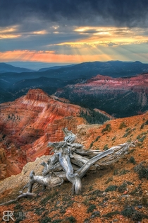 Cedar Breaks National Monument at Sunset Brian Head UT USA