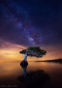 Celestial Cypress by Paul Marcellini photo taken in Florida