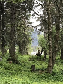 Cemetary in Sitka AK some headstones date back to s when Alaska part of Russia rilene x