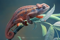 Chameleon Photo by Igor Siwanowicz