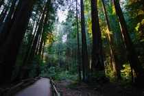 Chasing Light in Muir Woods