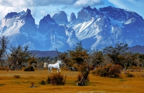 Chasing Unicorn - Torres del Paine National Park Patagonia Chile  by Vadim Balakin