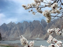 Cherry Blossom of Upper Hunza amp Passu Cones At Background