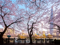 Cherry blossoms around Seokchon Lake Park obscuring the Lotte World Tower Seoul South Korea