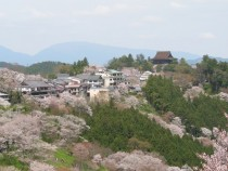Cherry blossoms at Yoshino Japan