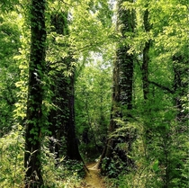 Chickasaw Trace Park - Maury County TN