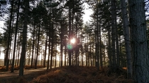 Chicksands Wood Bedfordshire United Kingdom