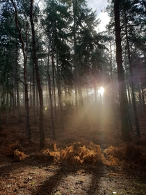 Chicksands Woods Bedfordshire UK