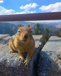 Chipmunk in Montana