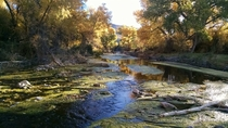 Cibolo Creek Shafter TX near Big Bend