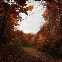 Clash of seasons in Tazewell County Virginia  resolution