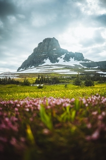Clements Mountain Glacier National Park Montana I have a series of photos in the same location with different flowers and vibes I will post more