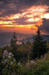 Clingmans Dome - Great Smoky Mountains