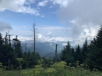 Clingmans Dome Tennessee USA