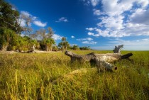 Coastal Wetlands - Shired Island Florida