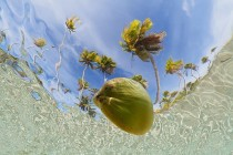 Coconut floating in the lagoon viewed from underwater French Polynesia