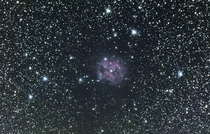Cocoon Nebula   minute stacked exposure using a  in Reflector and EQ mount in Upstate NY