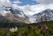 Colombia Icefields from Wilcox Pass Trail Alberta Canada  x
