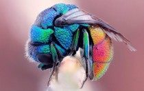 Colorful Fly x-post from rMacroPorn