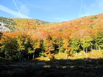 Colorful treetops at Nebraska Notch Vermont