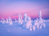 Colors of dawn in the frozen winter wonderland of Lapland Finland   IGmpxmark
