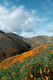 Colors sweeping the hillsides of Southern California