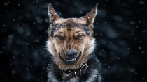 Come on I do not bite Canis lupus familiaris by Sergey Polyushko