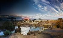 Composite  hour exposure of elephants zebras wildebeests meerkats and hippos by Stephen Wilkes