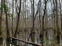 Congaree National Park South Carolina