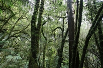 Cool Temperate Rainforest Great Otway NP Australia