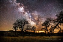 Cottonwoods and Milky Way - South Dakota