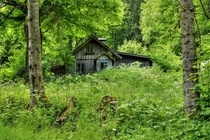 Cozy Cottage nestled and hidden away deep in the lush forests of Austria Photo by Bernhard Siegl
