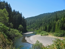 Creek meandering through the Redwoods- Northern California