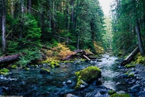 Creekside in an old growth forest Bull of the Woods Wilderness Oregon