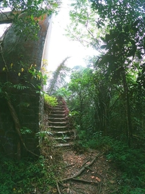 Creepy abandoned stairs being reclaimed by the jungle in Cambodia