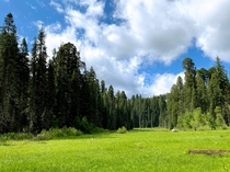 crescent meadow - the gem of the sierra - sequoia national park