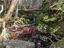 Crimson and Green - Franconia Notch State Park NH USA