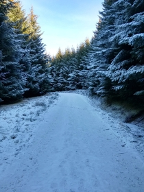 Crisp winter forest Griffin Forest Perthshire Scotland x Taken on Moto G